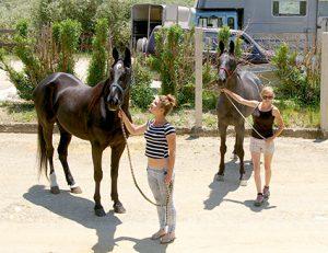 sicily horses