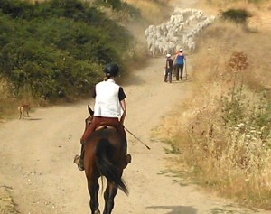 Horse riding in Italy